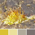 farbinspirationen-Stein-moos-gruengelb-steingrau