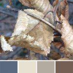 farbinspirationen-winter-buchenlaub-beige-braun-naturfarben