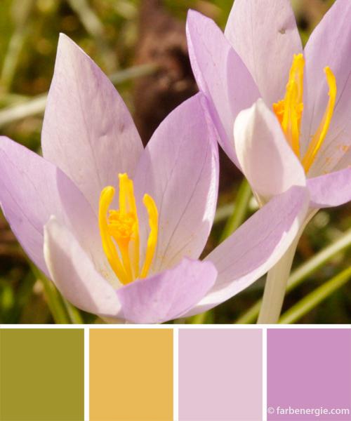 farbinspirationen-fruehlingsfarbe-flieder-gelb