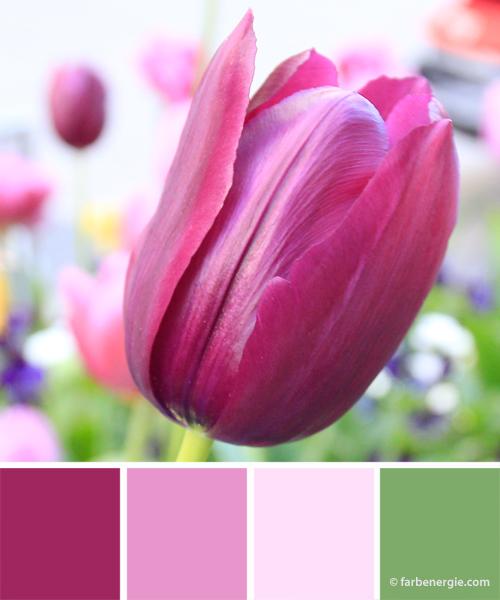 farbinspirationen-gruen-pink-violett-rose