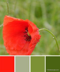 farbinspirationen-mohnrot-grasgruen