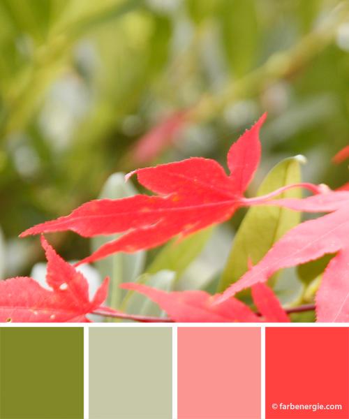 farbinspirationen-herbst-gruen-rot-rosa-ahornblaetter