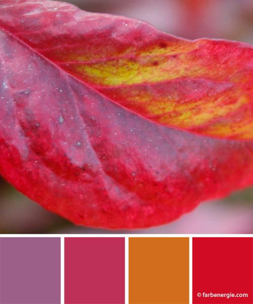 farbinspirationen-herbst-rot-violett