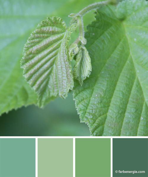 Farbinspirationen-Blaetter-Gruen-Fruehlingsgruen