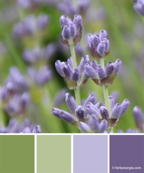 Farbinspirationen-Lavendel-Lavendellila-Fruehlingsgruen
