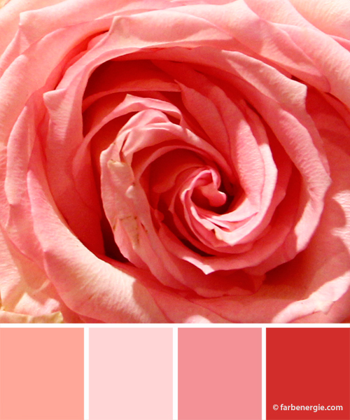 Farbinspirationen-Rosa-Rose