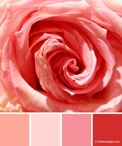Farbinspirationen-Rosa-Rose