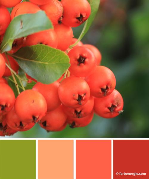 Farbinspirationen-Weihnachten-Koralle-Korallenrosa-Warmgruen