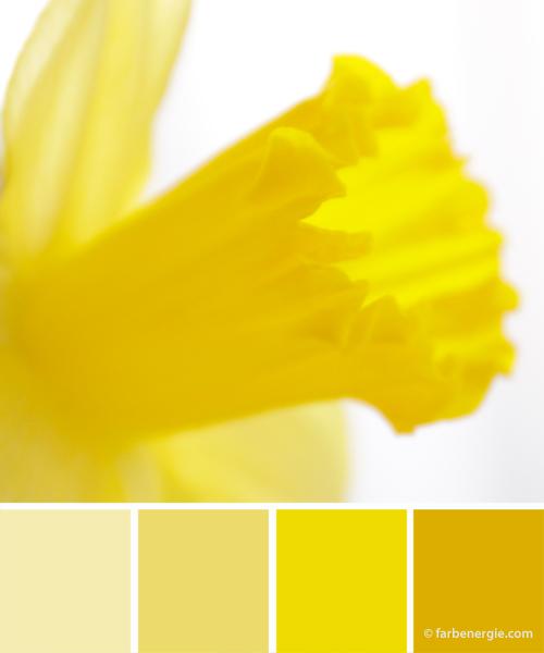 Farbinspirationen-Fruehling-Gelb-Dottergelb-Senfgelb
