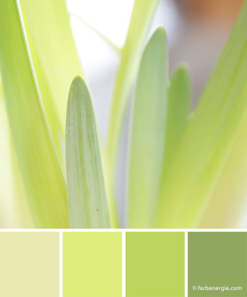 Farbinspirationen-Maigruen-Gelbgruen-Lemon