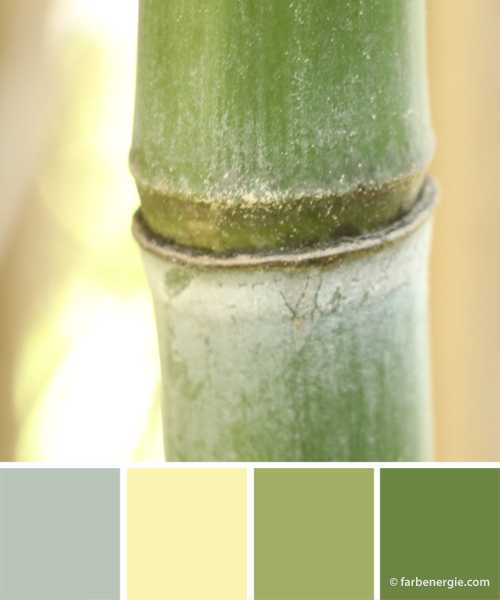 Farbinspirationen-Bambus-gruen