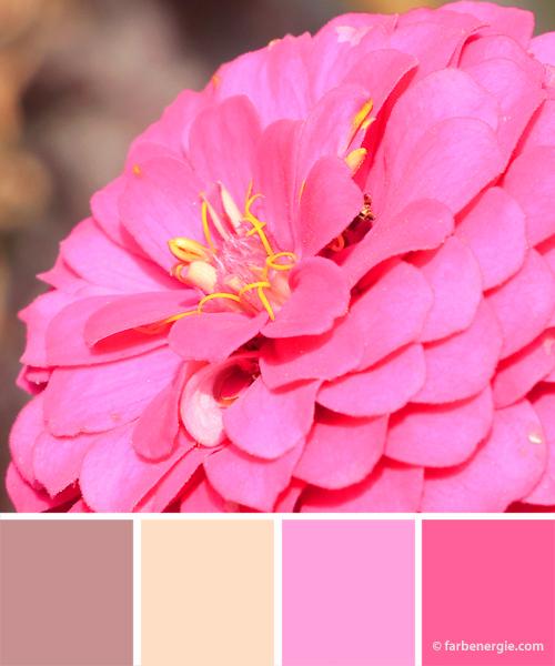 Farbinspirationen-Pink-Rosa-Vanille