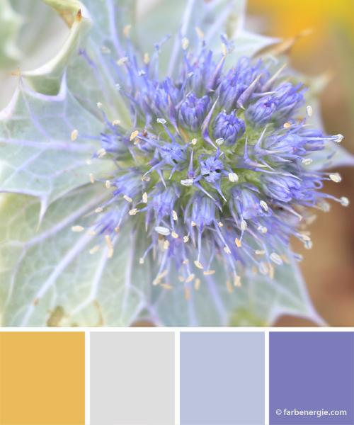 Farbinspirationen-Lavendel-Lavendelgrau-zarte-Farbtoene